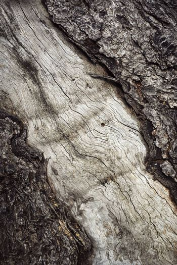 background or texture old tree trunk with cracked bark