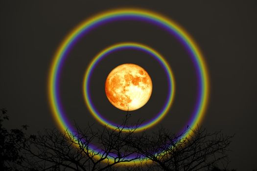 harvest blood moon double halo over top trees in the night sky