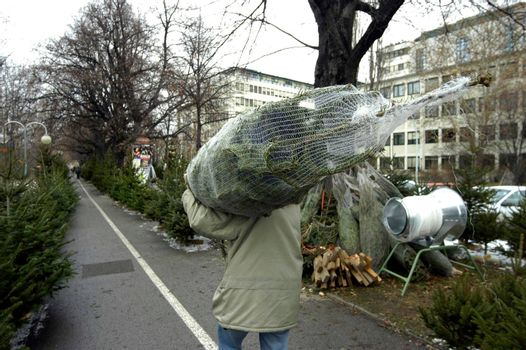 christmas tree transport in christmas season, decoration for the holidays
