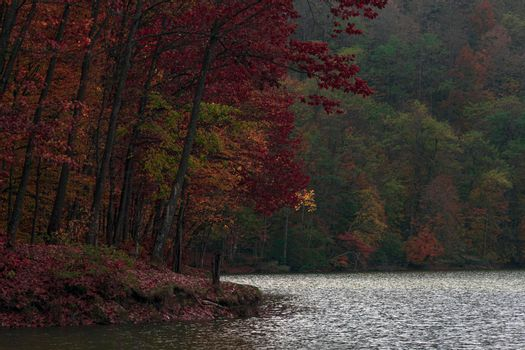 A colorful forest together with the lake that surrounds it, in the beautiful autumn