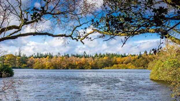 A view of the side of a lake, with the trees and vegetation, full of autumn colors. There are some clouds in the blue sky, an some branches from nearby trees framing the sides of the image.