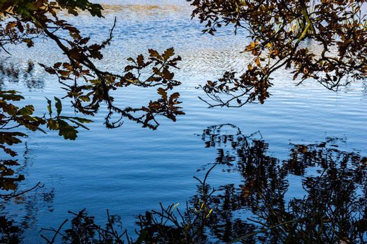 Close up image of branches from a tree near  the shore of a lake, hanging over the water.
