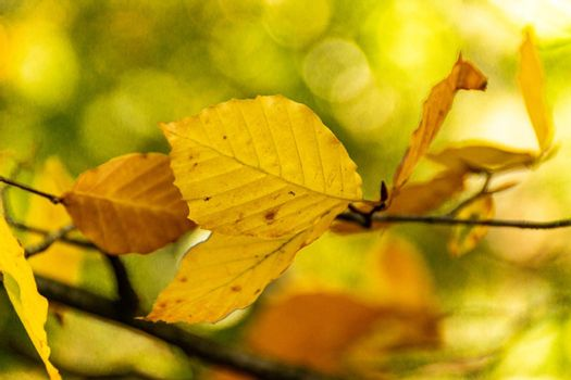 An image focusing on the warm colors of leaves during the autumn season