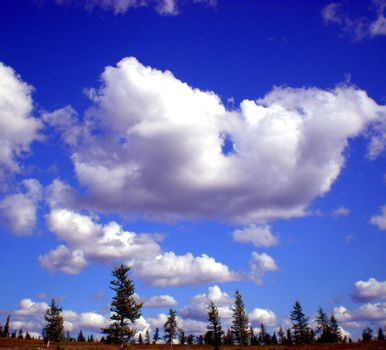 Blue sky with clouds over the taiga. The nature of the Russian north.