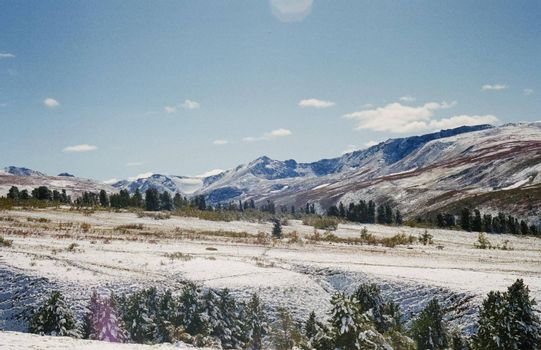 Winter Altai, mountains and forests in the snow. Winter came to the Altai and snow fell.