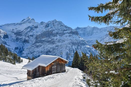 Beautiful mountain winter landscapes. Alps in winter. Grindelwald Switzerland