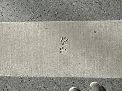 It depicts appear of human feet and animal footprints on the pedestrian way