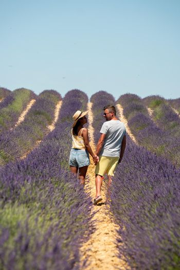 Pink purple lavender fields blooming in the Provence France. Europe