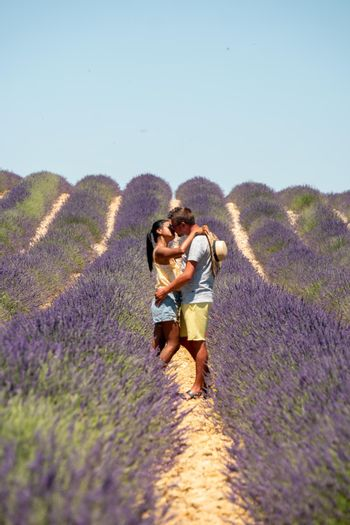 Pink purple lavender fields blooming in the Provence France