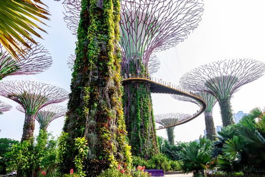 supertree Singapore gardens by the bay, Singapore, Oct 12, 2018
