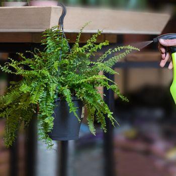 Mixed Hanging Ferns Silk Foliage Planter watering
