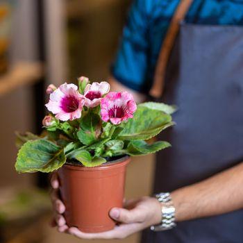 Gardener holding flower plant