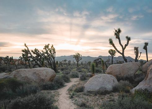 Rays of light spread over a trail going through the desert in California.