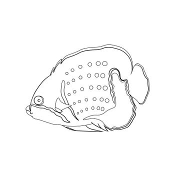 sea fish in linear drawing. Children drawing for coloring. Vector on white