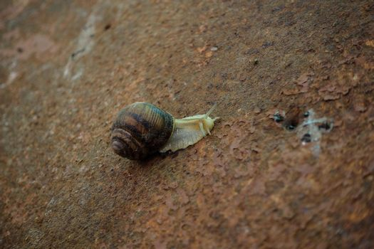 A snail on rusty metal.
