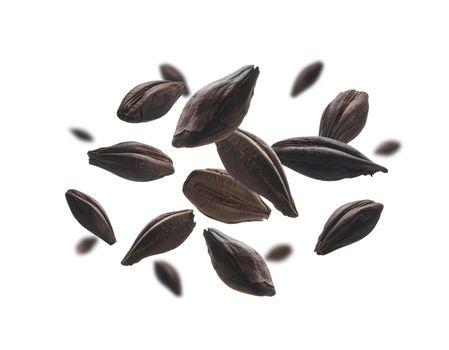 Roasted rye malt grains levitate on a white background