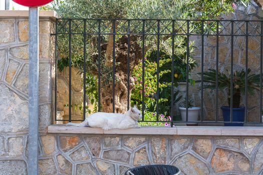 Weiße Katze liegt auf einer Mauer