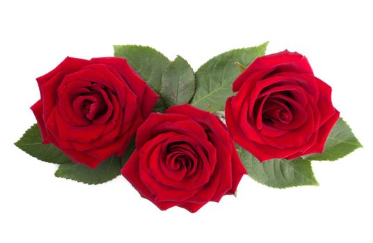 Red rose flowers and leaves arrangement isolated on white background, top view, design element for Valentines day