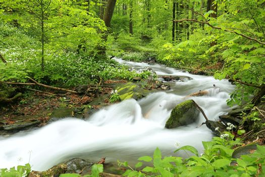 Forest stream flowing down from the mountains.