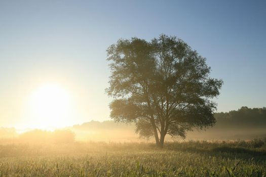 Misty morning with oak tree in the foreground.