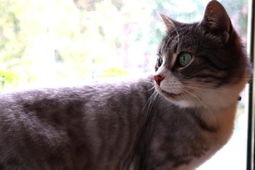 Gray cat on a window background