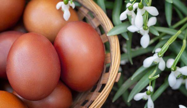 In a wicker basket near flowering snowdrops are red Easter eggs.