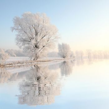 Frosty winter tree against a blue sky at dawn.