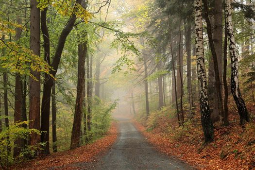 A trail among beech trees through an autumn forest in a misty rainy weather.