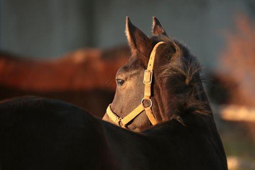 Horse at dusk