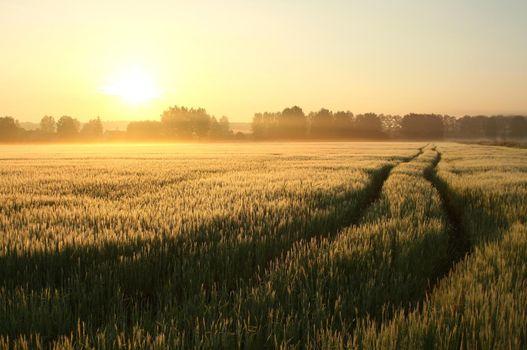 Sunrise over a field