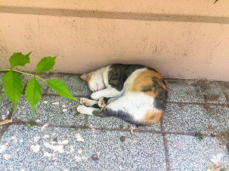 It depicts a cat sleeping outside