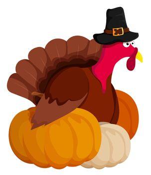 sly, wary turkey hid behind holiday pumpkins at animal farm. Turkey is main dish of Thanksgiving. Autumn harvest. Cartoon vector