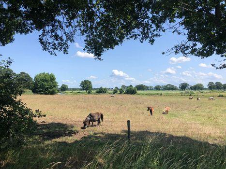 Ponies in the meadow around Beerze