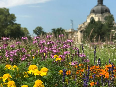Flowers in front of the Szechenyi Thermal Bath