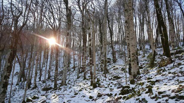 Sunshine through the trees in Biogradska Gora