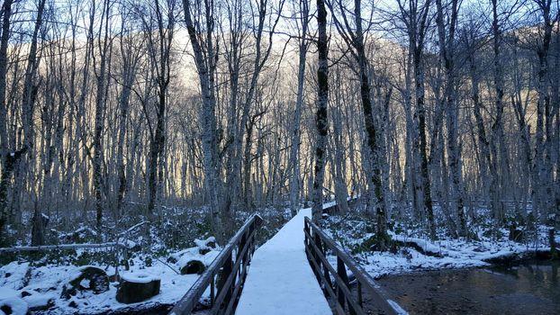 Snow in Biogradska Gora