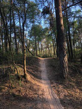 Mountainbike path through the Sallandse heuvelrug National park