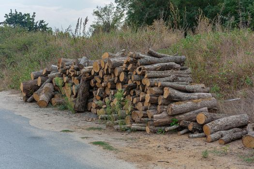 A woodpile is stacked near the road