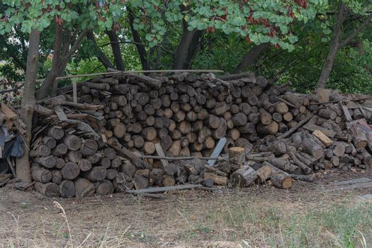 A woodpile is stacked among the trees
