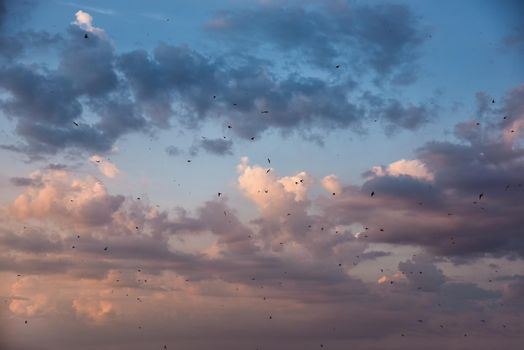 many birds flying in the sky, nature series