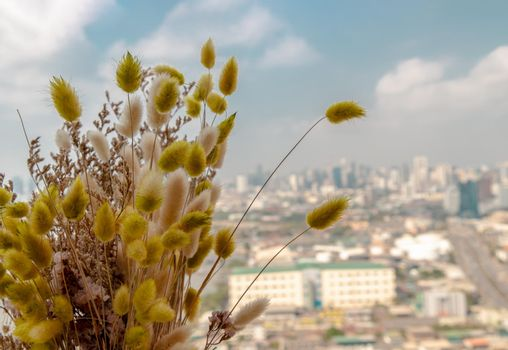 Close-up of Dried flowers with blur city town background. Home decor. Space for text. Selective focus.