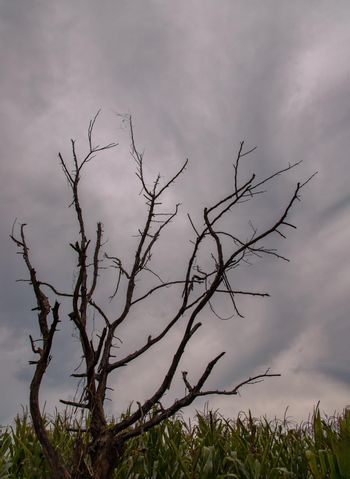 The details of Bare tree branches against blue skies. Natural scenery. Space for text, No focus, specifically.