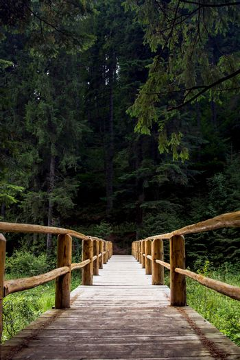 Wooden bridge over the river. Green and dense forest at the end of the bridge.