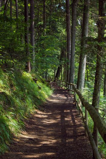 A path through the forest. A path on the slope of the mountain. Natural background of green forest.