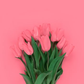 Bouquet of tulips on a pink background.