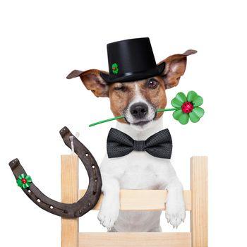 chimney sweeper dog
