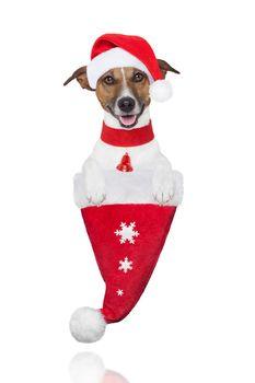 santa christmas dog in a hat