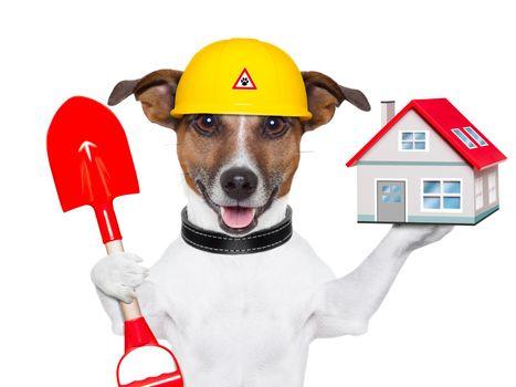 home dog builder
