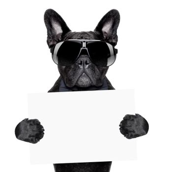 placard dog