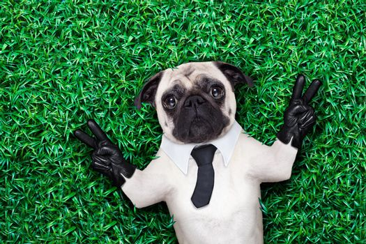 cool pug dog